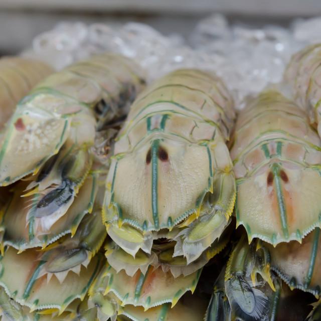 """seafood market"" stock image"