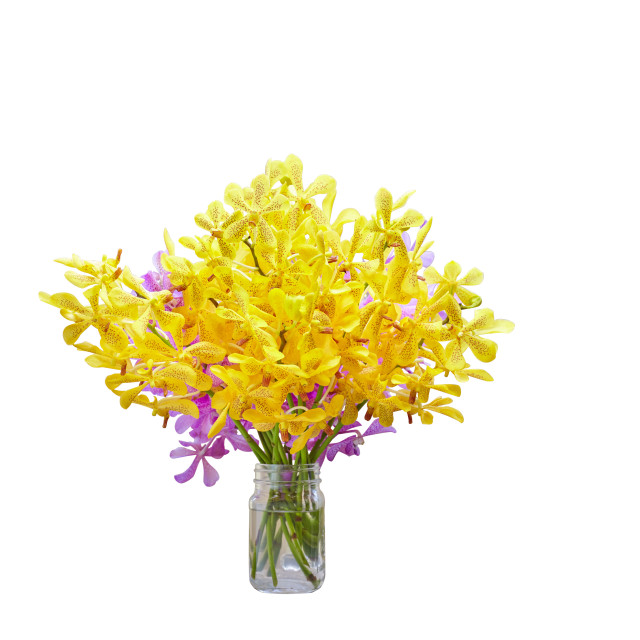 """Vase of yellow and purple orchid flower isolated on white background with clipping mask"" stock image"
