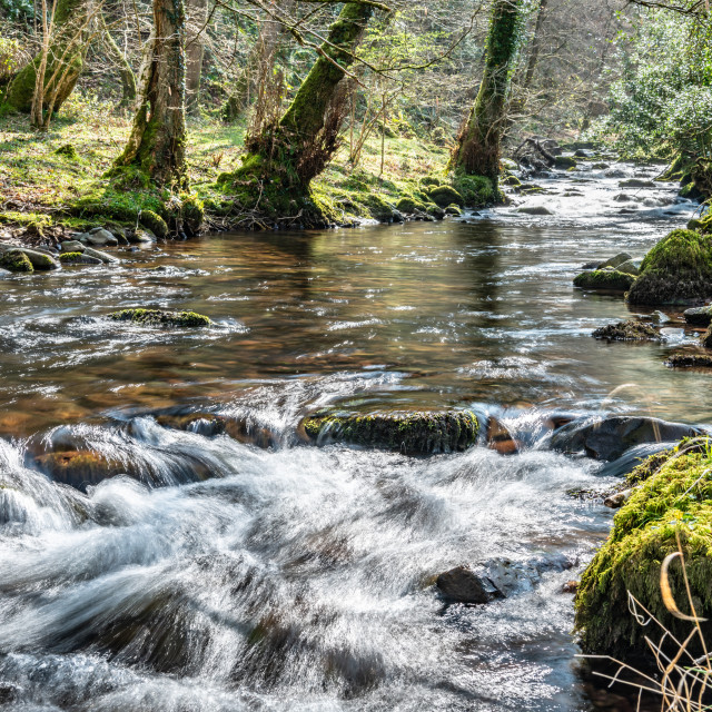 """Flowing River, Horner Woods, Devon, England"" stock image"