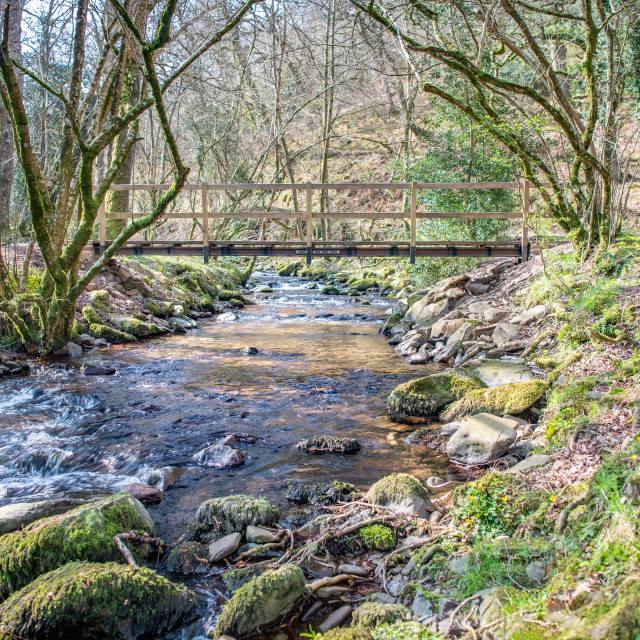 """Footbridge over River in woodland, Horner woods, Devon, England"" stock image"