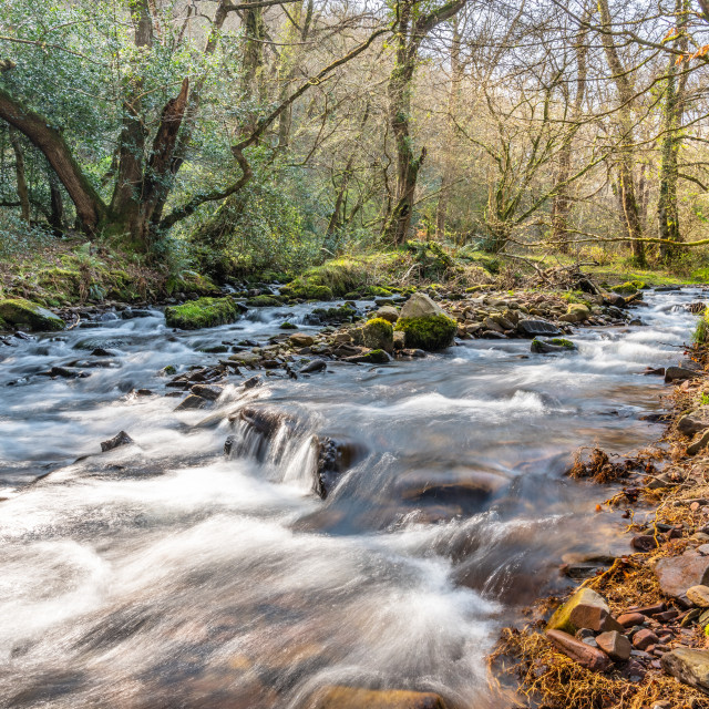 """River in woodland, Horner woods, Devon, England"" stock image"
