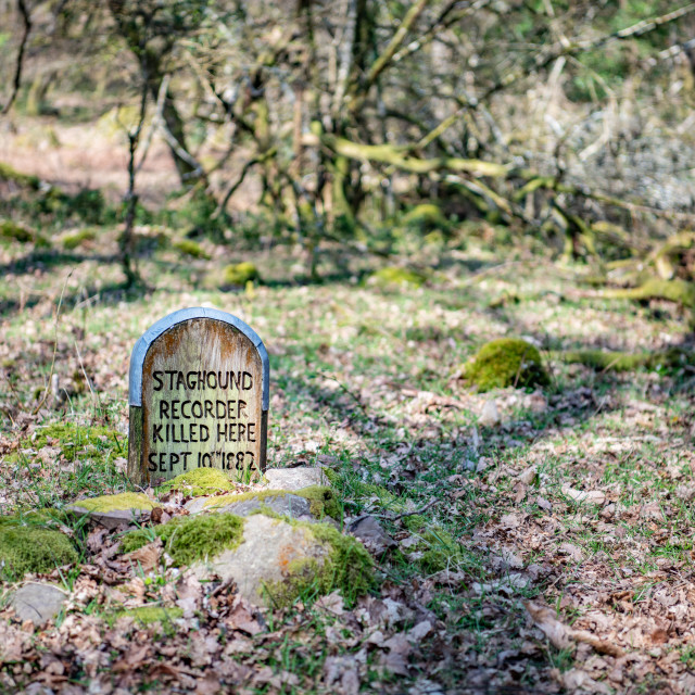 """Woodland Dog's Grave"" stock image"