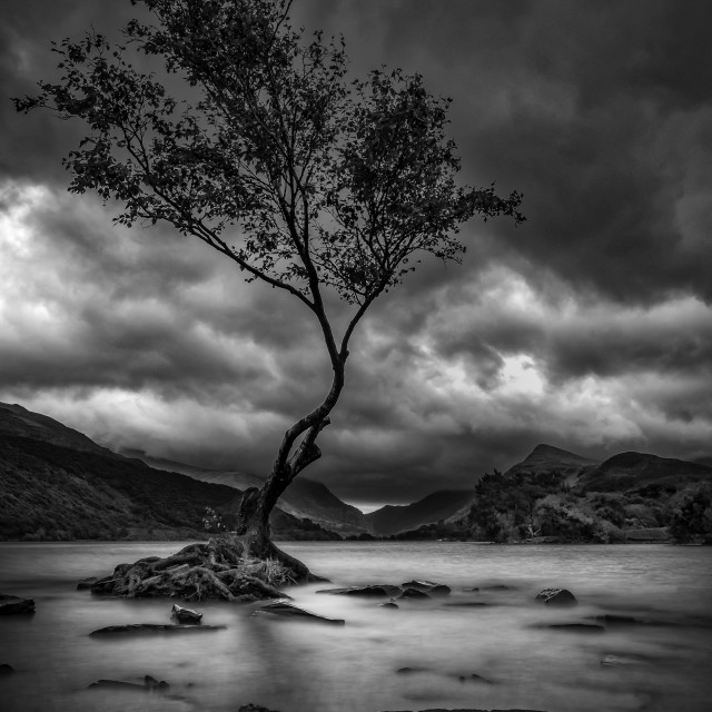 """Tye lonely tree of Llyn Padarn"" stock image"