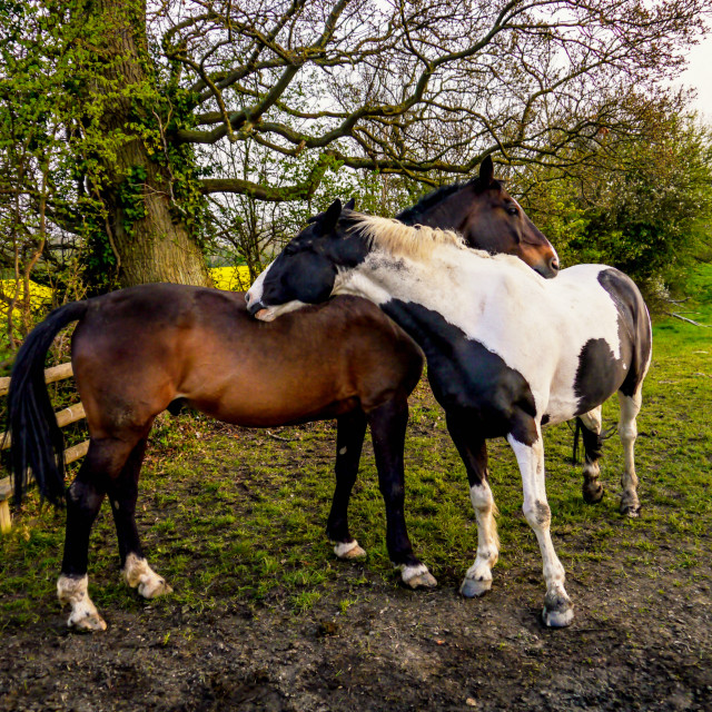 """Horse Hug"" stock image"