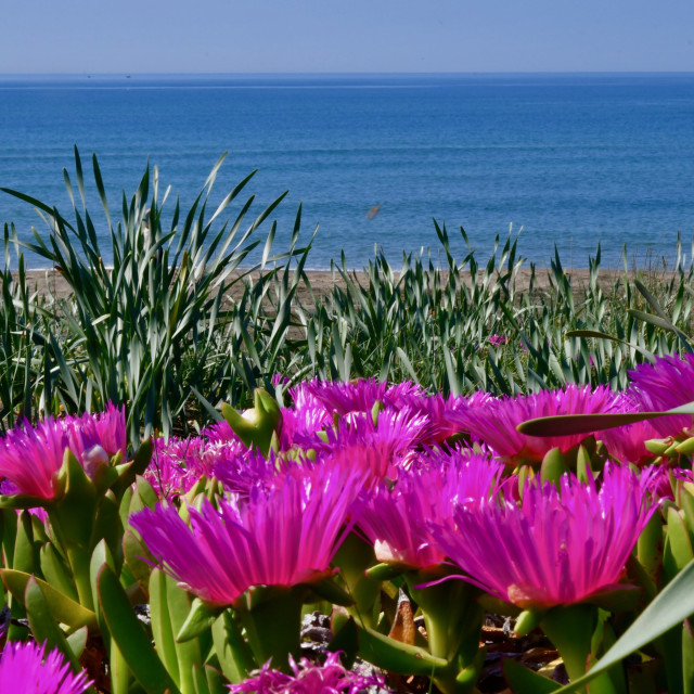 """Spring flowering on the beach"" stock image"