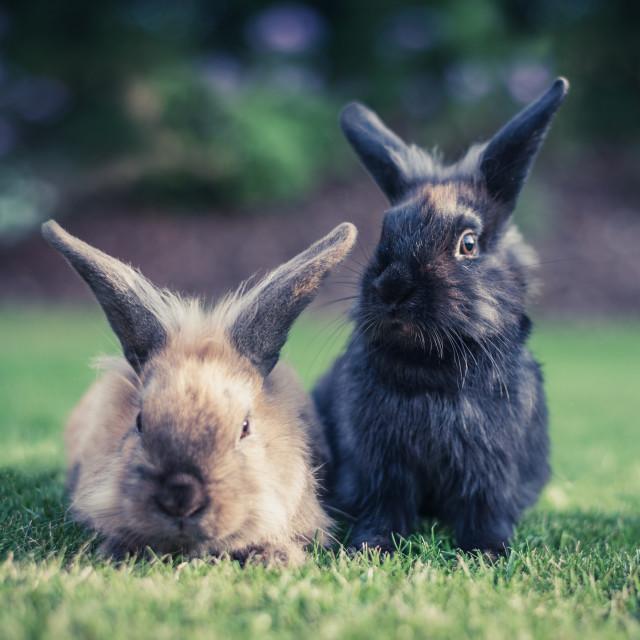 """""""Bunny portrait"""" stock image"""
