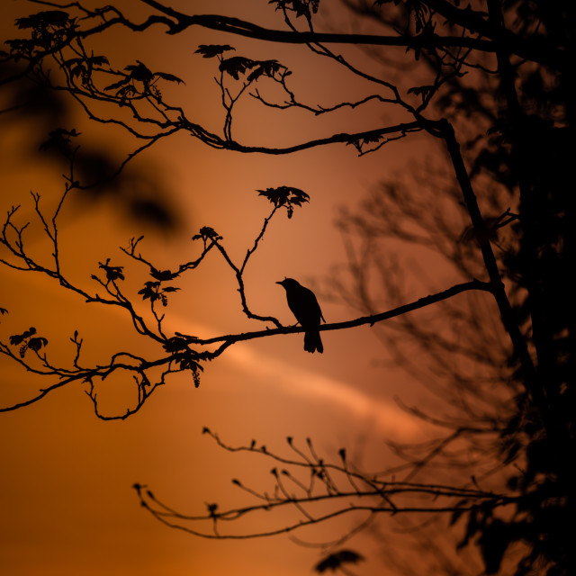 """Bird in a tree"" stock image"