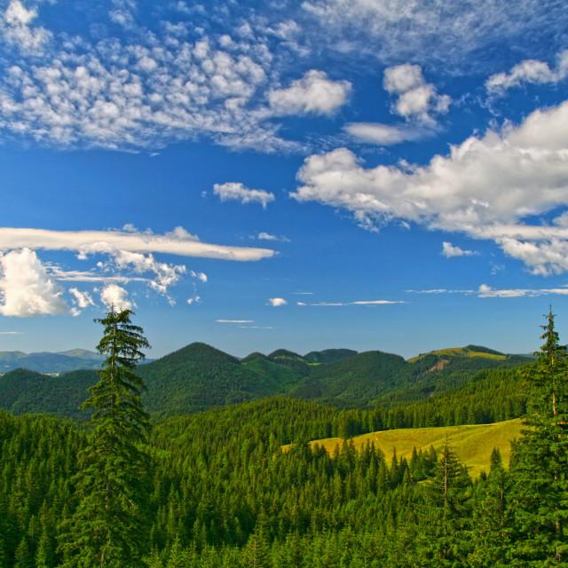 """""""Summer forest landscape against blue sky"""" stock image"""
