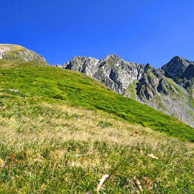 """Alpine meadow in summer mountain"" stock image"
