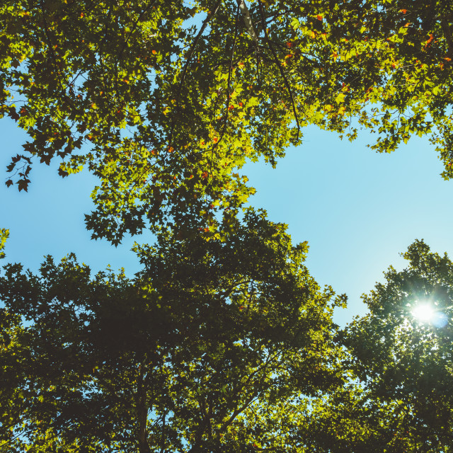 """Trees Branches And Leaves On Summer Blue Sky"" stock image"