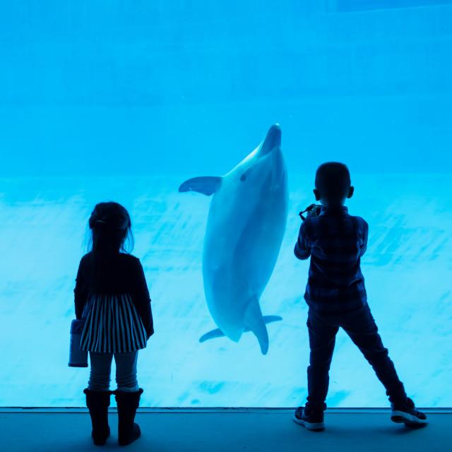 """Silhouette children watching dolphin in aquarium"" stock image"