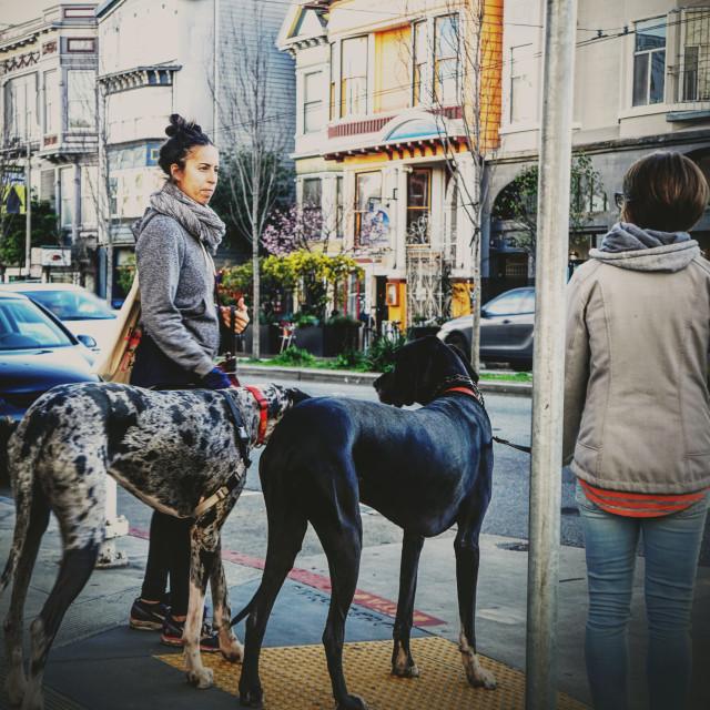 """Walk the big dogs"" stock image"