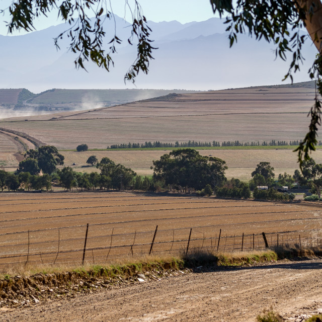 """""""Harvested wheat fields in the western Cape"""" stock image"""