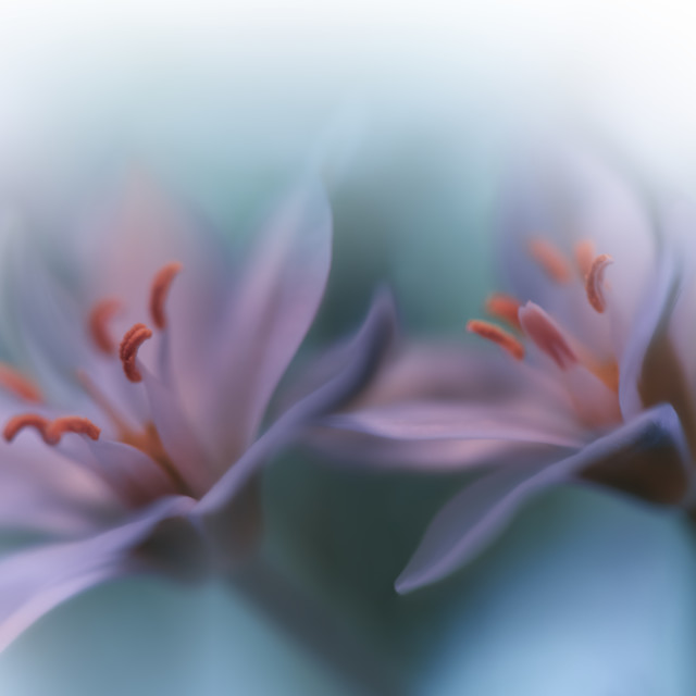 """Beautiful Green Nature Background.Love,romance,romantic.Fantasy Floral Art."" stock image"
