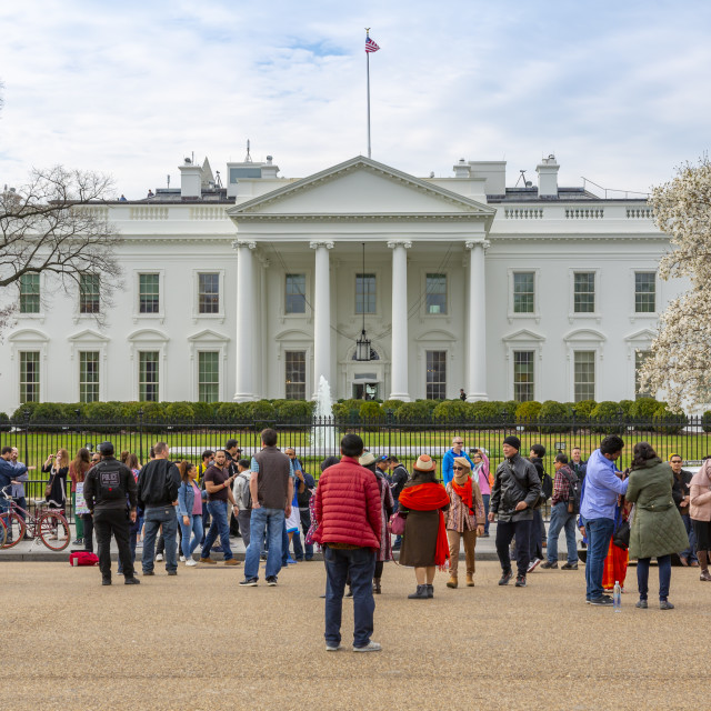 """""""View of the White House and spring blossom, Washington D.C."""" stock image"""