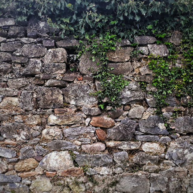 """""""Old Wall"""" stock image"""