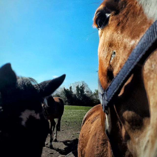 """""""Greetings from the Equestrians"""" stock image"""