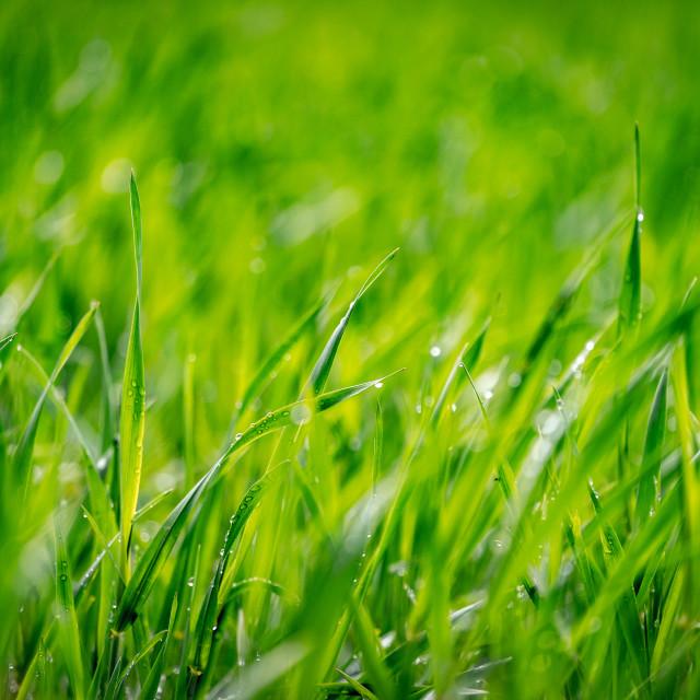 """""""Green Grass Wallpaper"""" stock image"""