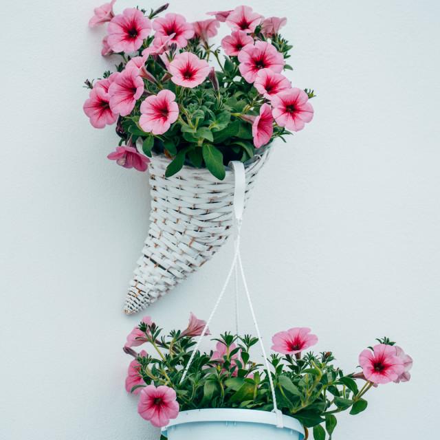 """Flowers arrangement in Ostuni, Italy"" stock image"