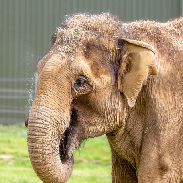 """""""The Elephant"""" stock image"""