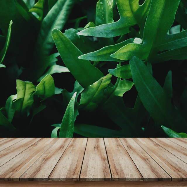 """Wooden tabletop for mock up or montage products display with green leaves background"" stock image"