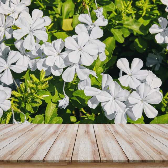 """Empty wooden table top with white flower background, design for montage products display or mock-up"" stock image"