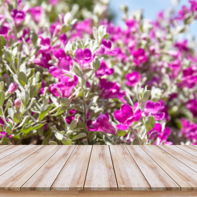 """Empty wooden table top with purple flower background, design for montage products display or mock-up"" stock image"