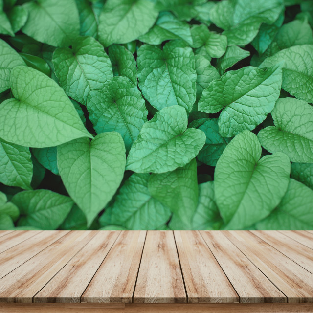 """Wooden board for montage products display for sale promote with beautiful green leave background"" stock image"