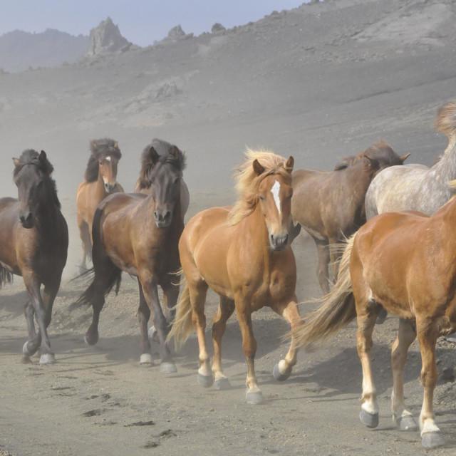 """""""Horses Iceland"""" stock image"""