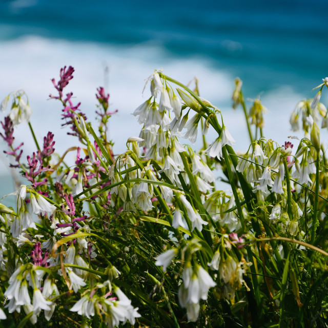 """Flowers by the sea"" stock image"