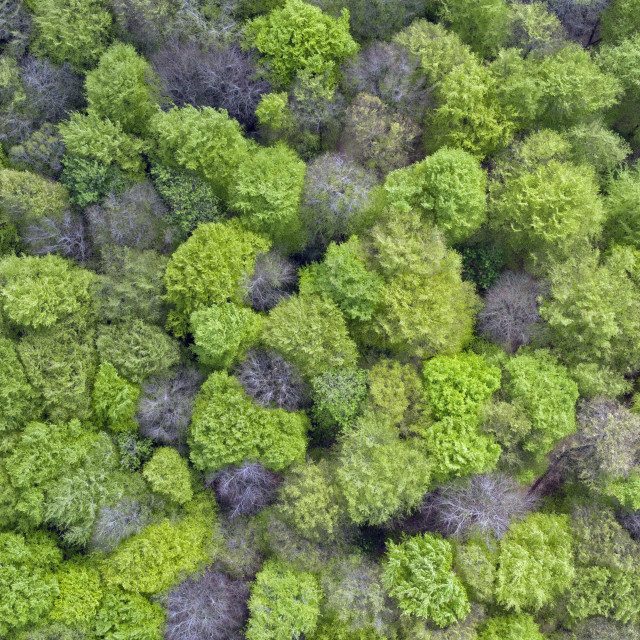 """The forest canopy by drone"" stock image"