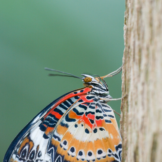 """""""Exotic butterfly at rest"""" stock image"""