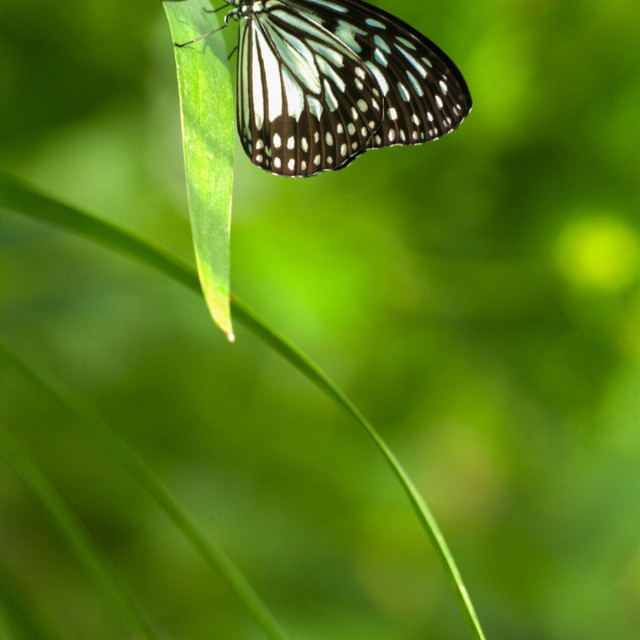 """""""Resting exotic butterfly"""" stock image"""