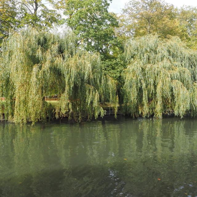 """River Cam in Cambridge"" stock image"