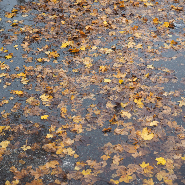 """""""brown leaves in water texture background"""" stock image"""