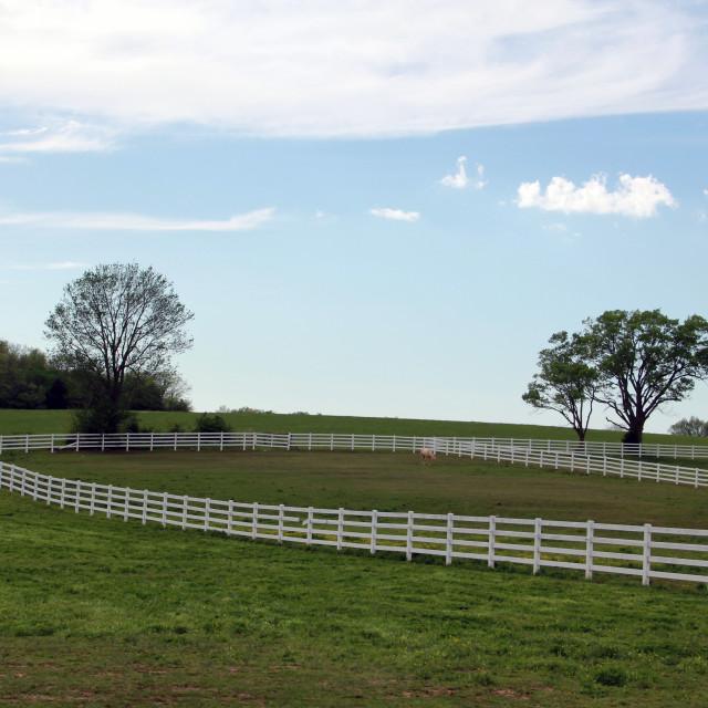 """Horse Pasture"" stock image"