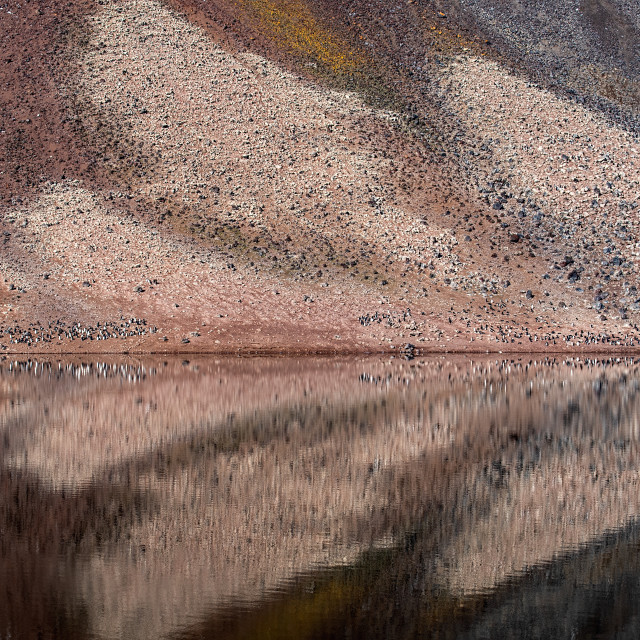 """Gentoo Penguins reflected in Paulet Island Lake"" stock image"