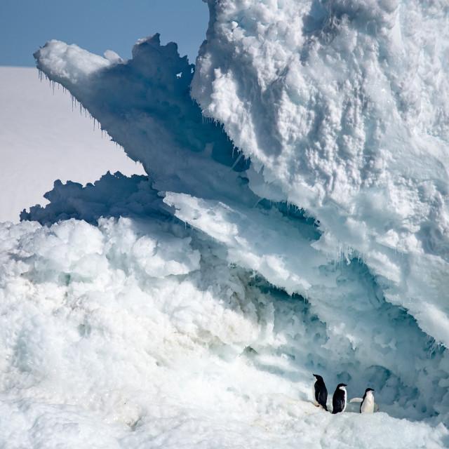"""""""Adelies on an Iceberg"""" stock image"""
