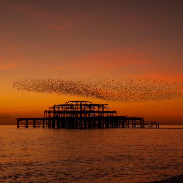 """Sunset, Pier, Murmuration"" stock image"