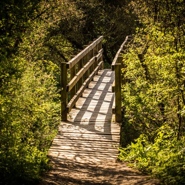 """Pathway of Light"" stock image"