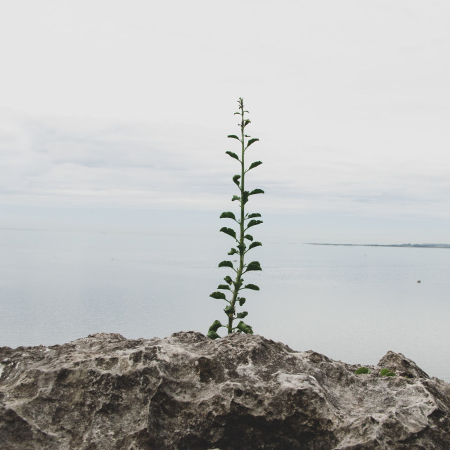 """Grow"" stock image"