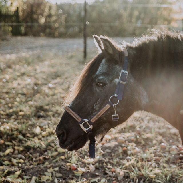 """""""Horse in the sun"""" stock image"""