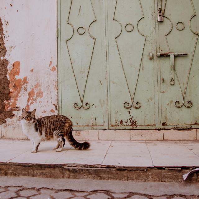 """Moroccan Cat"" stock image"