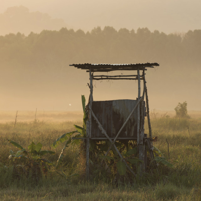 """Paddy field sunrise"" stock image"