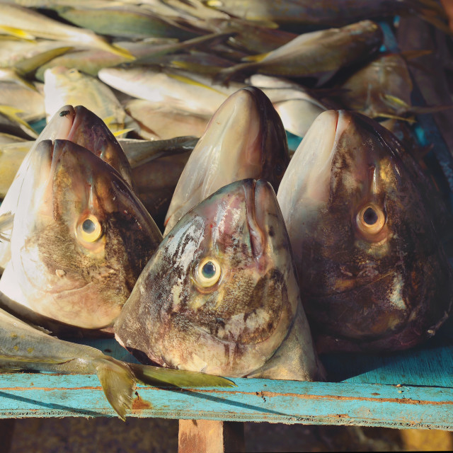 """Fish heads"" stock image"
