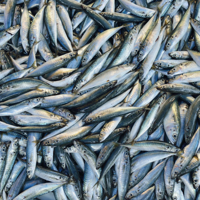 """Mackerel"" stock image"