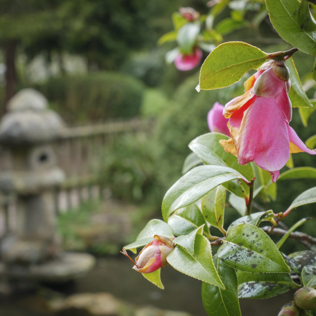 """""""Flowers in Japanese garden"""" stock image"""