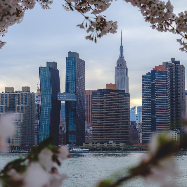 """""""New York City skyline viewed through tree blossoms in spring"""" stock image"""