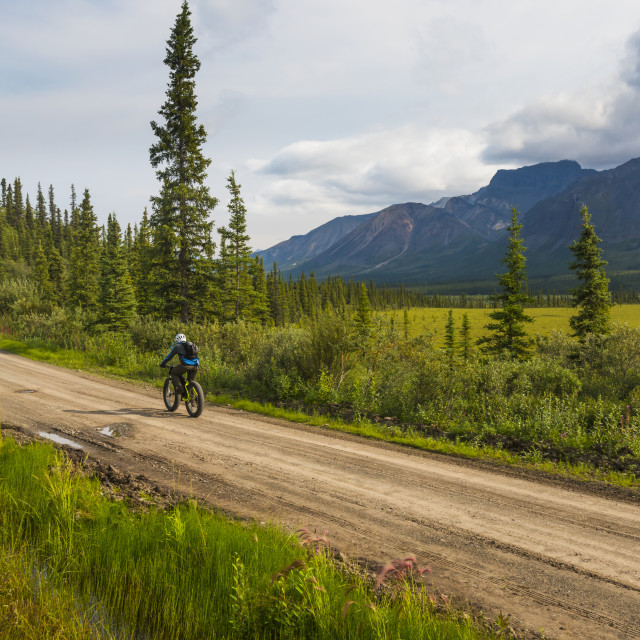 """""""A man fat biking on the Nabesna Road in Wrangell-St. Elias National Park and..."""" stock image"""