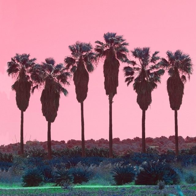 """""""Palm trees in a row abstract surrealistic pink and green color"""" stock image"""